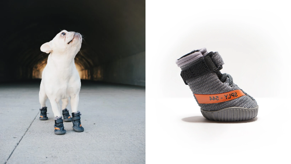 YEEZY-Sneakers-For-Dogs-1